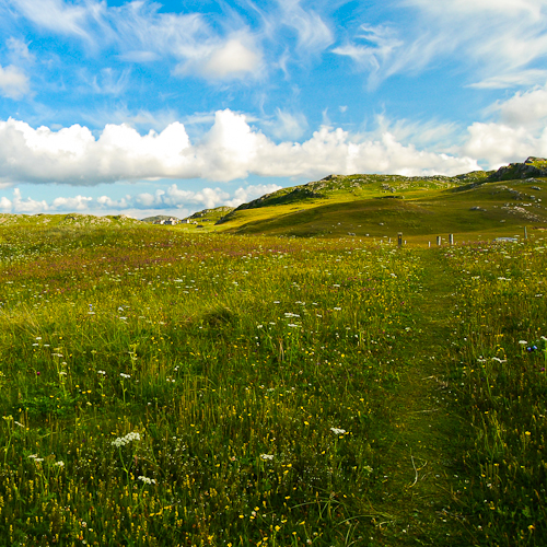 One of the many flower meadows that can be found on the Outer Hebrides, Scotland (PA1, PC0)